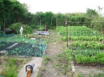 Allotment_after